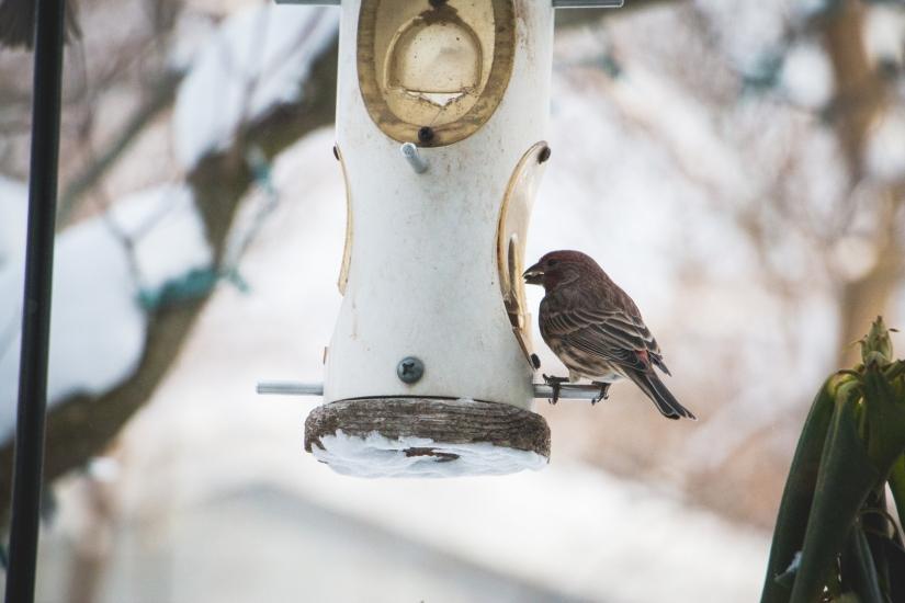 winterbirds_013