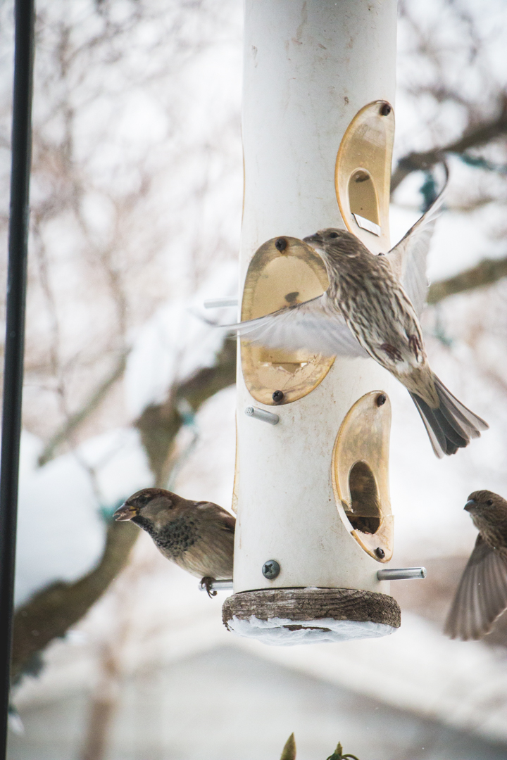 winterbirds_017
