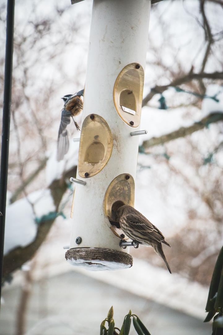 winterbirds_019