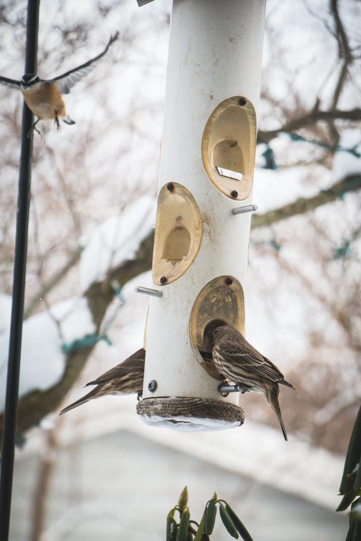 winterbirds_020