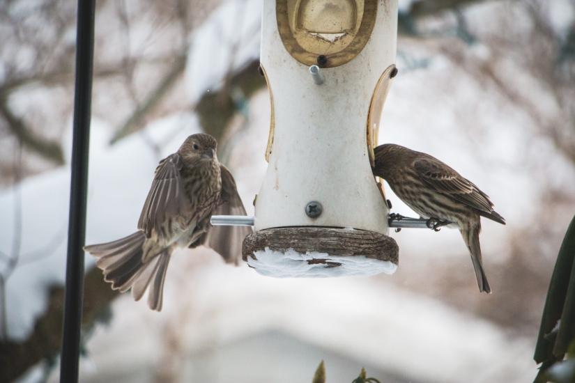 winterbirds_022