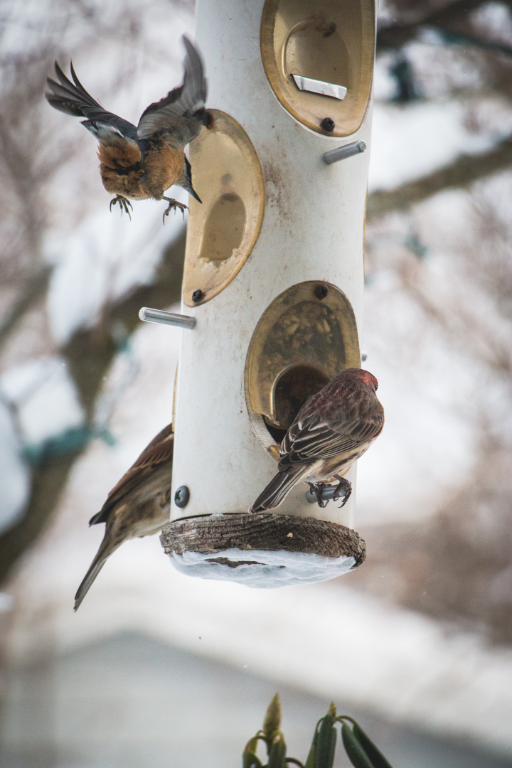 winterbirds_027