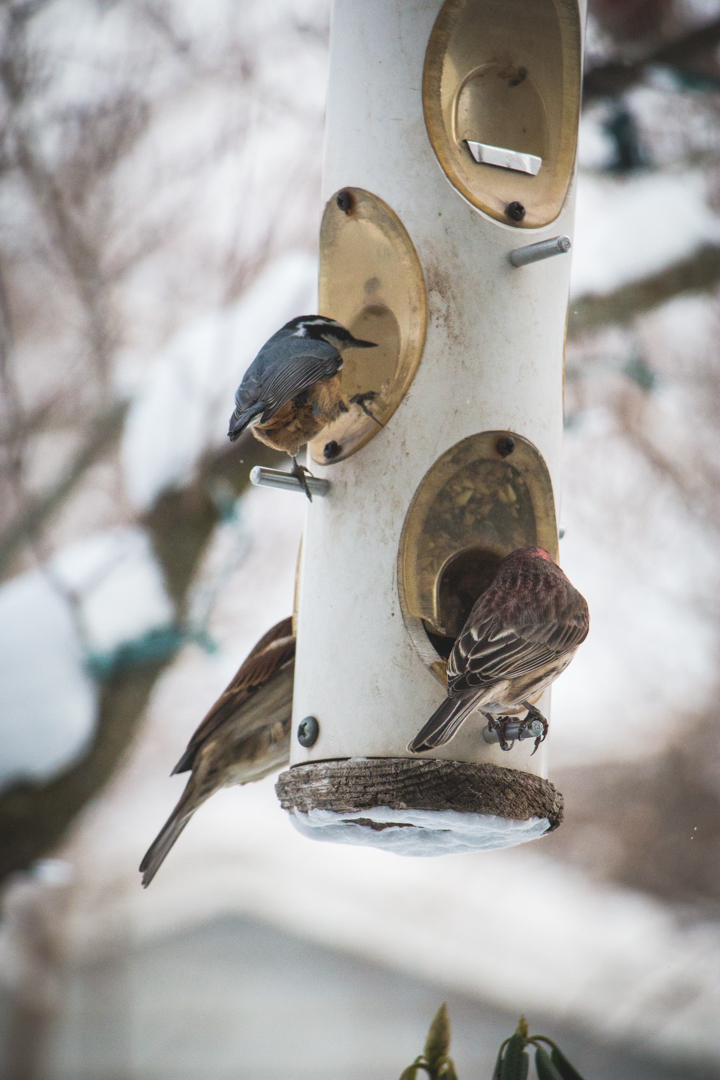 winterbirds_028