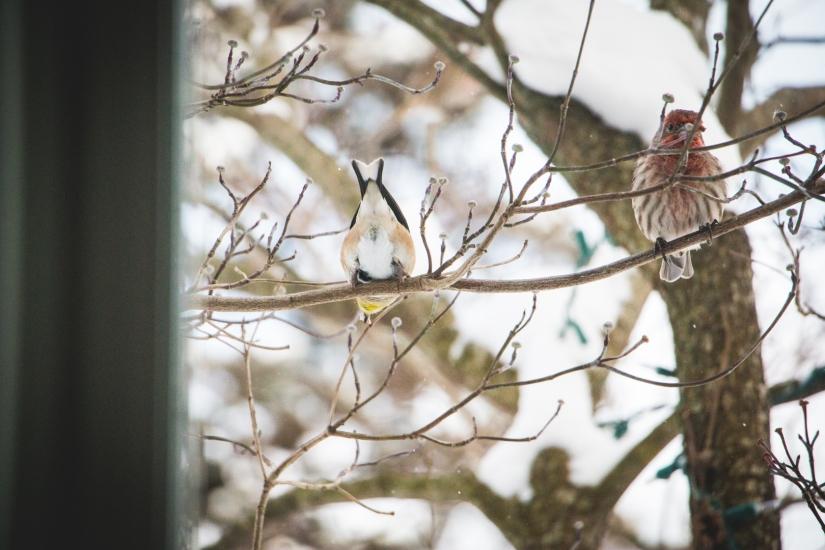 winterbirds_031