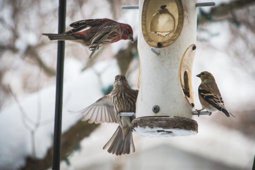 winterbirds_046
