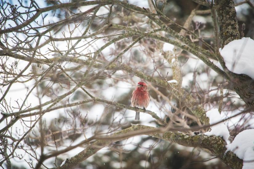 winterbirds_063
