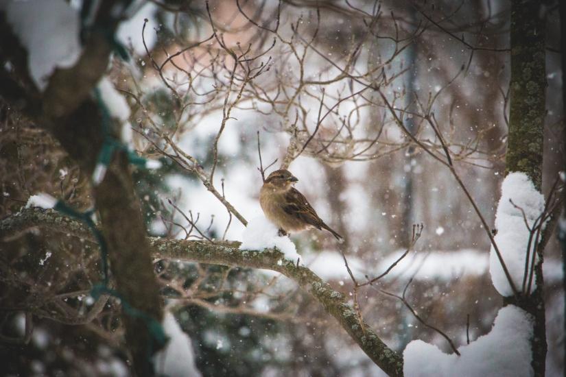winterbirds_090
