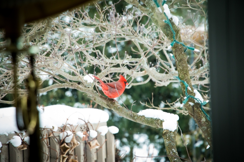 winterbirdsjan001