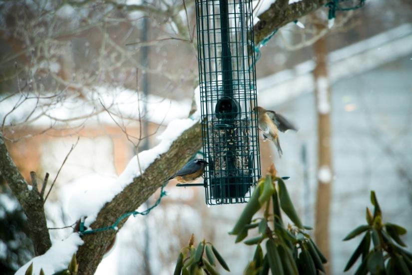winterbirdsjan007