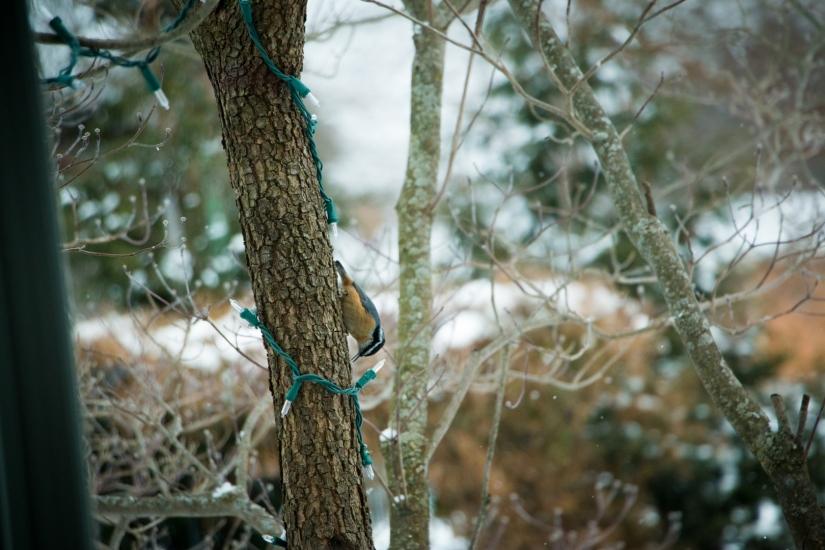 winterbirdsjan010