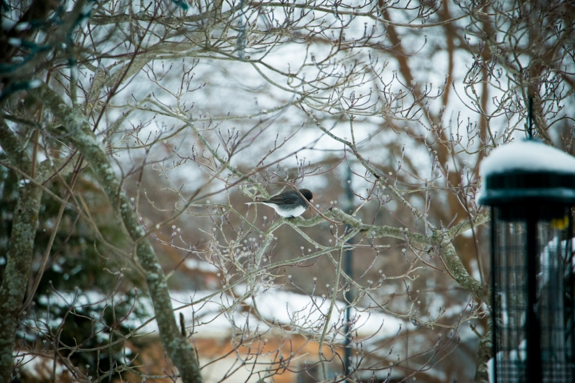 winterbirdsjan011