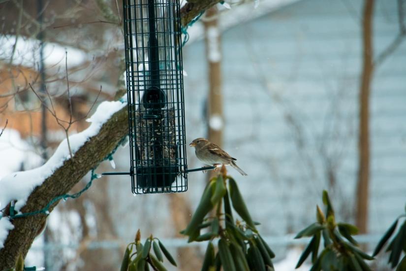 winterbirdsjan012