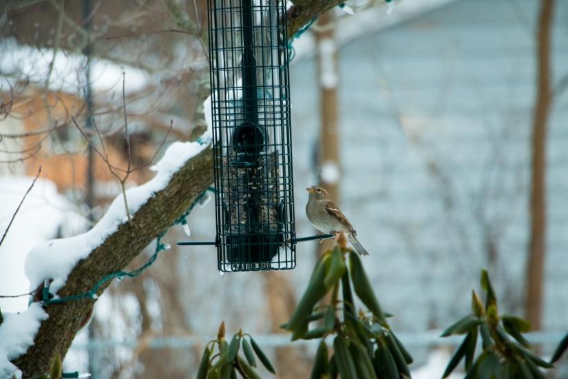 winterbirdsjan014