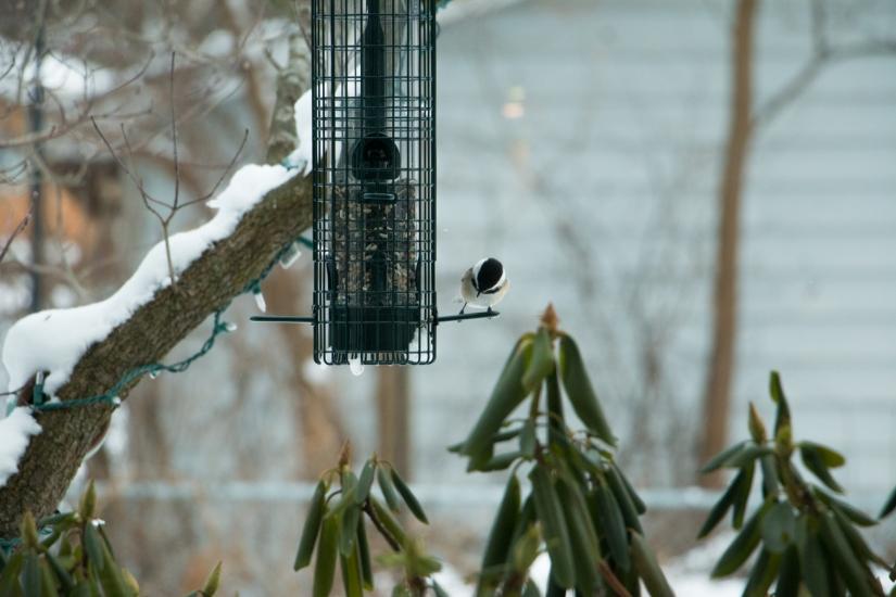 winterbirdsjan022
