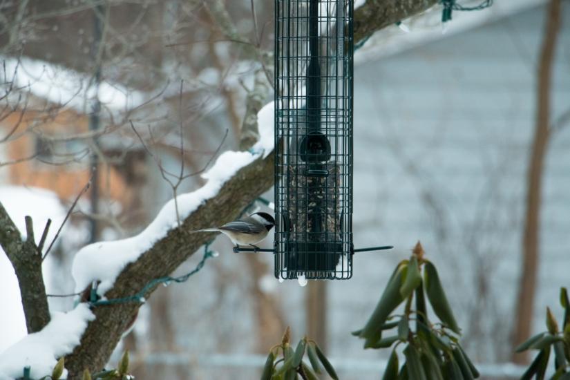 winterbirdsjan024