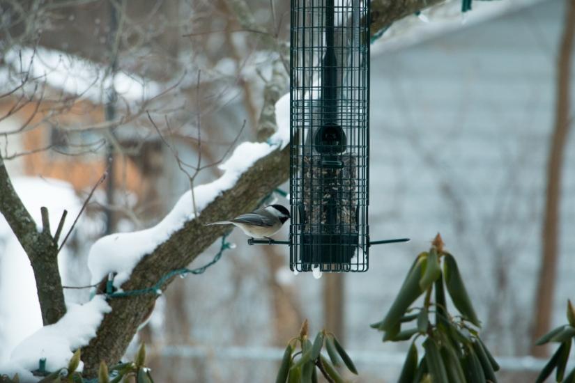 winterbirdsjan025
