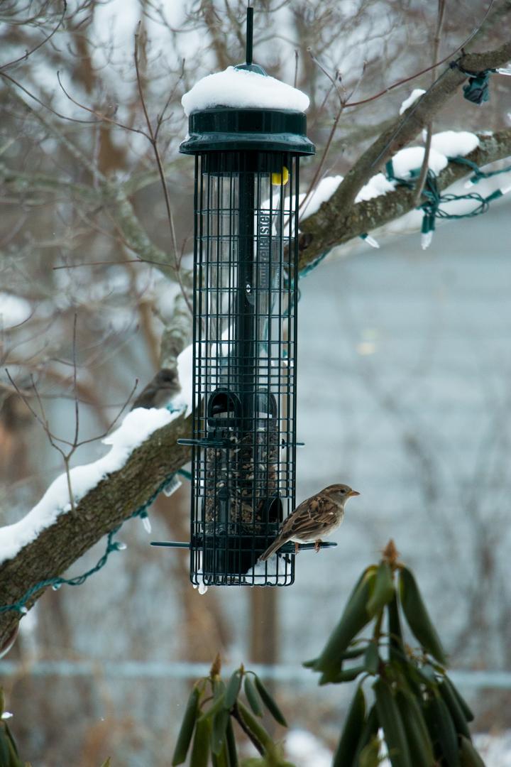 winterbirdsjan029