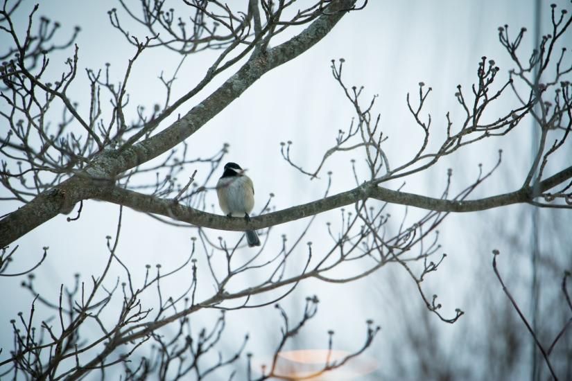 winterbirdsjan032